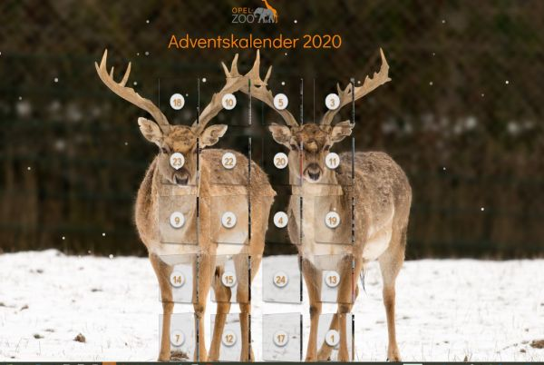 Neu: Adventskalender